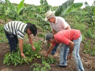 La población cubana tiene garantizada  una adecuada alimentación