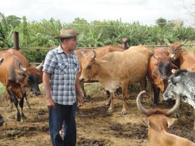 Aporte de los veterinarios  al enfrentamiento de la sequía